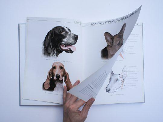 La Laparotomie exploratrice chez le chien